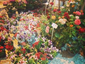 هشتمين نمايشگاه گل و گياه